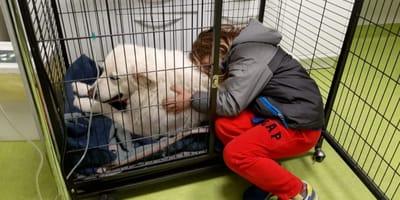 cane-in-gabbia-e-bambino-abbracciato