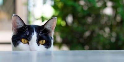 Sai perché il gatto ti fissa e ti salta addosso?