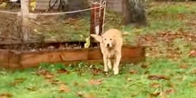 Dog comes home muddy: Owner follows him outside to find out why, and is astounded
