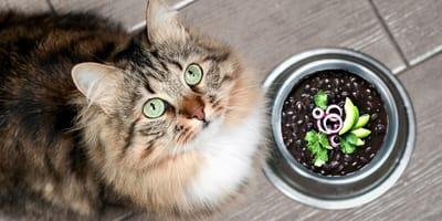 ¿Los gatos pueden comer frijoles? Mira qué efectos tienen en ellos
