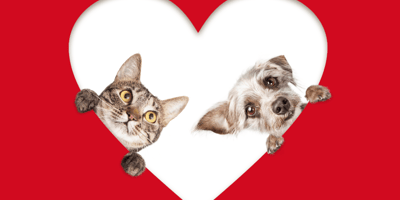 frases graciosas de San Valentín para solteros de perros y gatos