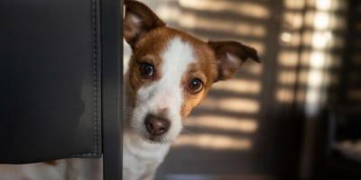 I cani mentono? Tutto su Fido e le bugie