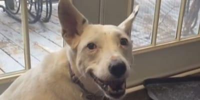 Happy looking dog