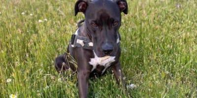 Wzruszające spotkanie opiekunki z Brutusem: psem, który zaginął podczas eksplozji w Madrycie (VIDEO)