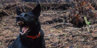<p>Zagrożenie wścieklizną na Mazowszu - chrońmy psy i koty!</p>