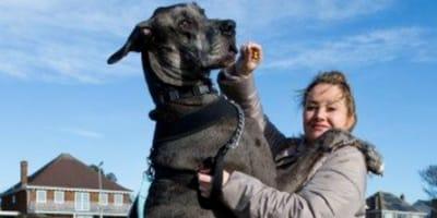 Lutto nel mondo animale: Freddy il cane più grande del mondo è morto
