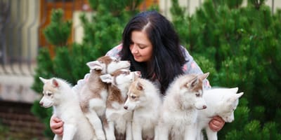 How to make sure you are buying from a reputable dog breeder