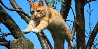 Gato naranja saltando de un árbol