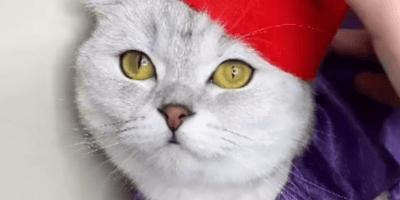 Esta gata se hace viral con la mejor interpretación de Aladdín que has visto en mucho tiempo