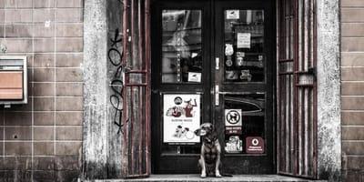 Pies pod budynkiem