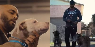 Still images from Canine Intervention Netflix show