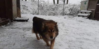 Pies od kilku dni wałęsa się przy drodze: to, co znajduje w rowie, przyprawia o dreszcze