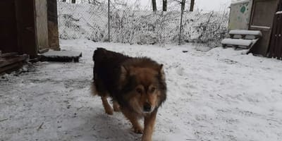 Pies ratujący suczkę