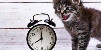 Haben Katzen eigentlich ein Zeitempfinden?