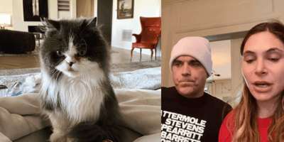 grey and white persian cat robbie williams and wife ayda williams