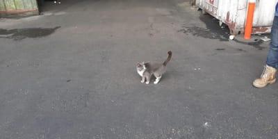 Kot w porcie