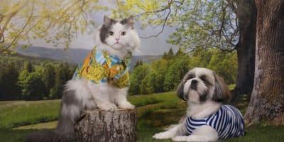 Cosa succede agli animali umanizzati? Gli effetti su cani e gatti