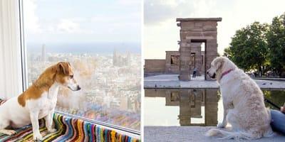 Madrid o Barcelona: ¿qué ciudad es la más pet friendly?