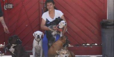 Mujer de Edomex ha rescatado a más de 100 perros de la calle: esta es su historia