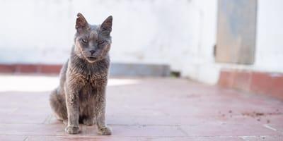Cosa fanno i gatti prima di morire?