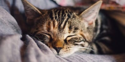 Do cats dream? Your cat's sleep secrets revealed!