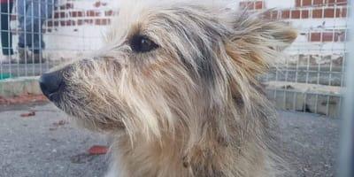 adopcion perro mestizo distel protectora malagon