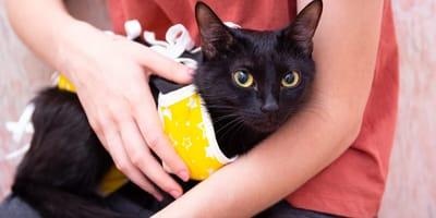 Jak się opiekować kotką po sterylizacji?