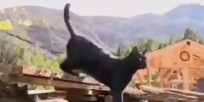 gato sale entre escombros