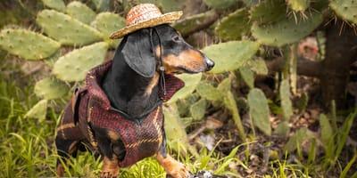 ¿Los perros pueden comer nopales?: mira qué efectos tiene este alimento