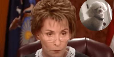 Richterin Judy und Bild von weißem Pudel