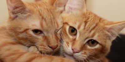 Nach einem Tag: Mann bringt Katzen mit hahnebüchener Erklärung zurück ins Tierheim