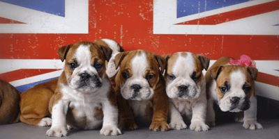 Two UK cities top list of pet-friendly places in Europe
