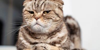 por que mi gato se enoja conmigo