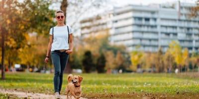 La nuova normativa di una città italiana per chi possiede animali