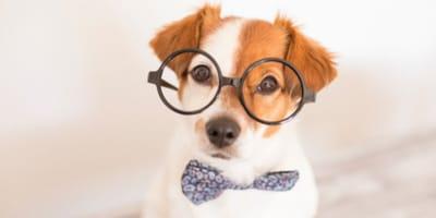 cane-con-occhiali-e-papillon