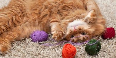 ¿Los gatos ven a color? Todo sobre la visión gatuna