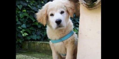 Cucciolo ridotto in fin di vita cerca casa: l'appello dell'Enpa
