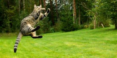 Perché il gatto cade sempre in piedi?