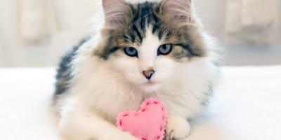 Nombres para gatos cariñosos: la lista más romántica, especial San Valentín