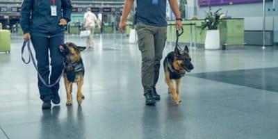 persone-con-cani-in-aeroporto