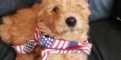 Al salir de la peluquería, esta perra no puede disimular su indignación con su nuevo corte (Vídeo)