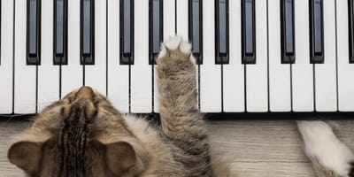 Nadie podía creer lo que hace este gato ciego cuando escucha a su 'pianista favorito', así que lo grabaron