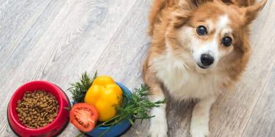 perro junto a pimientos de colores