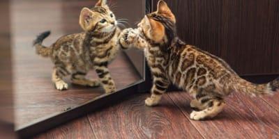 Il gatto allo specchio si riconosce?