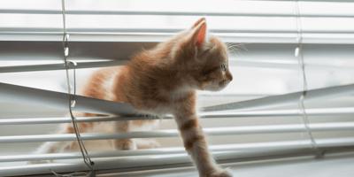 gato atrapado en persiana