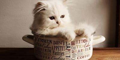 Quali sono i pericoli in casa per i gatti d'appartamento?