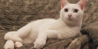 Érase una vez un gatito blanco extremadamente bello y sin hogar: ¿qué pasó con él?