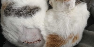 Kotka ze sparaliżowanymi łapkami trafia do uśpienia, ale u weterynarza wydarza się cud!
