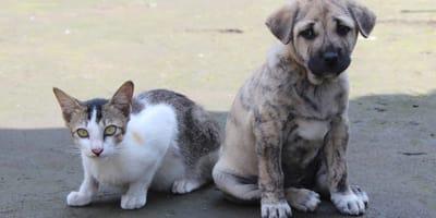Covid: a Seul partono i test su cani e gatti