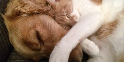 cane e gatto coccoloni
